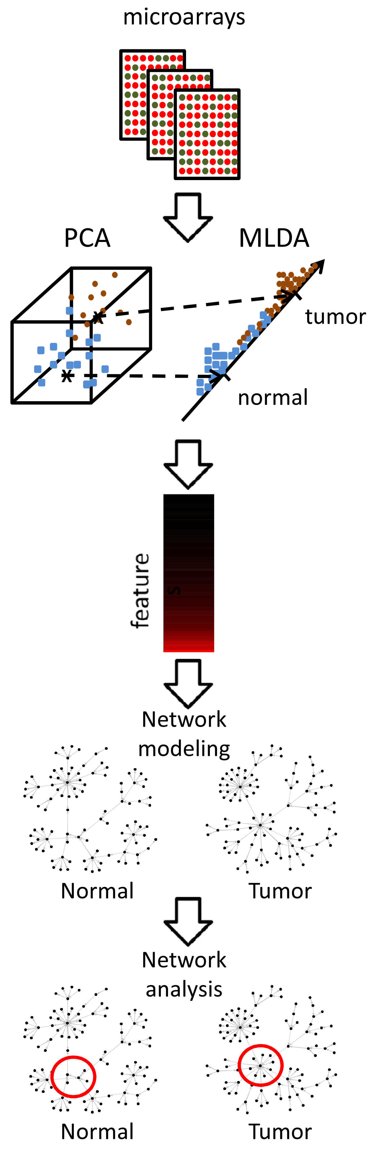 http://static-content.springer.com/image/art%3A10.1186%2F1752-0509-2-106/MediaObjects/12918_2008_Article_263_Fig1_HTML.jpg