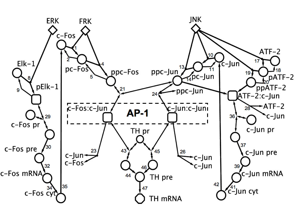 http://static-content.springer.com/image/art%3A10.1186%2F1752-0509-4-171/MediaObjects/12918_2010_Article_582_Fig2_HTML.jpg