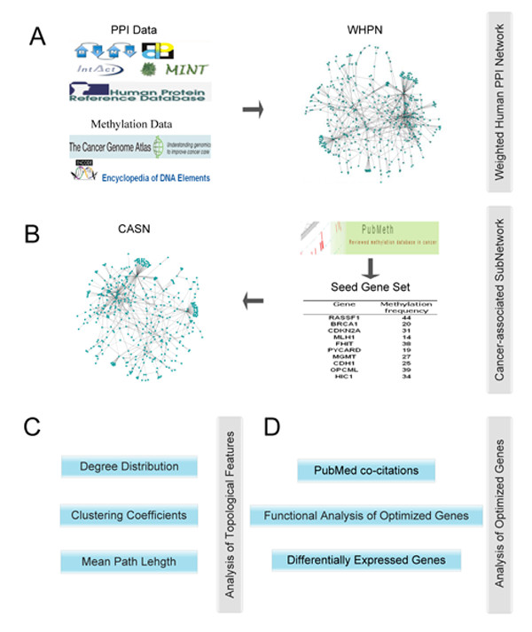 http://static-content.springer.com/image/art%3A10.1186%2F1752-0509-5-158/MediaObjects/12918_2011_765_Fig1_HTML.jpg