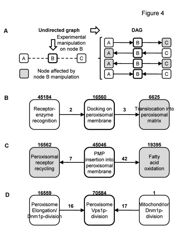 http://static-content.springer.com/image/art%3A10.1186%2F1752-0509-6-44/MediaObjects/12918_2011_910_Fig4_HTML.jpg