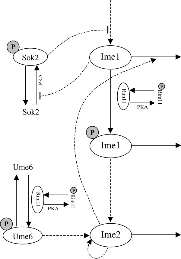 http://static-content.springer.com/image/art%3A10.1186%2F1752-0509-7-37/MediaObjects/12918_2012_1083_Fig1_HTML.jpg