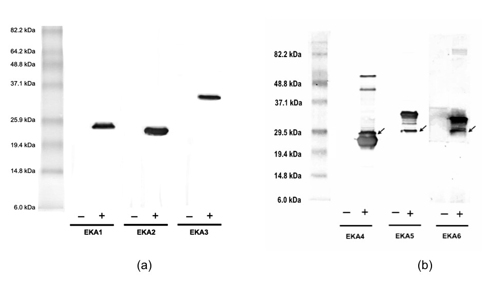 http://static-content.springer.com/image/art%3A10.1186%2F1754-1611-3-2/MediaObjects/13036_2008_Article_28_Fig2_HTML.jpg