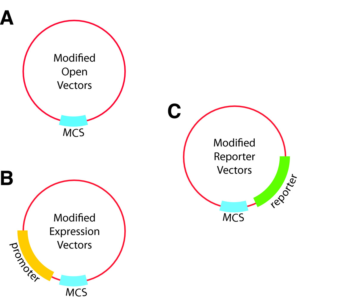 http://static-content.springer.com/image/art%3A10.1186%2F1754-1611-6-8/MediaObjects/13036_2012_Article_97_Fig2_HTML.jpg