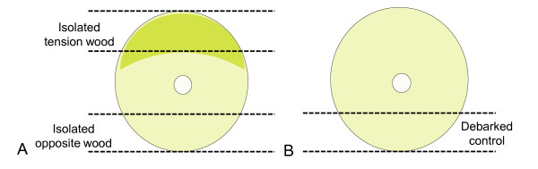 http://static-content.springer.com/image/art%3A10.1186%2F1754-6834-4-13/MediaObjects/13068_2011_88_Fig1_HTML.jpg