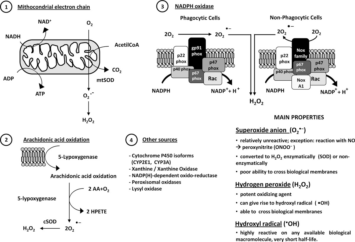 http://static-content.springer.com/image/art%3A10.1186%2F1755-1536-5-S1-S4/MediaObjects/13069_2012_Article_76_Fig1_HTML.jpg