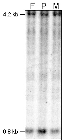 http://static-content.springer.com/image/art%3A10.1186%2F1755-8166-2-27/MediaObjects/13039_2009_Article_55_Fig1_HTML.jpg