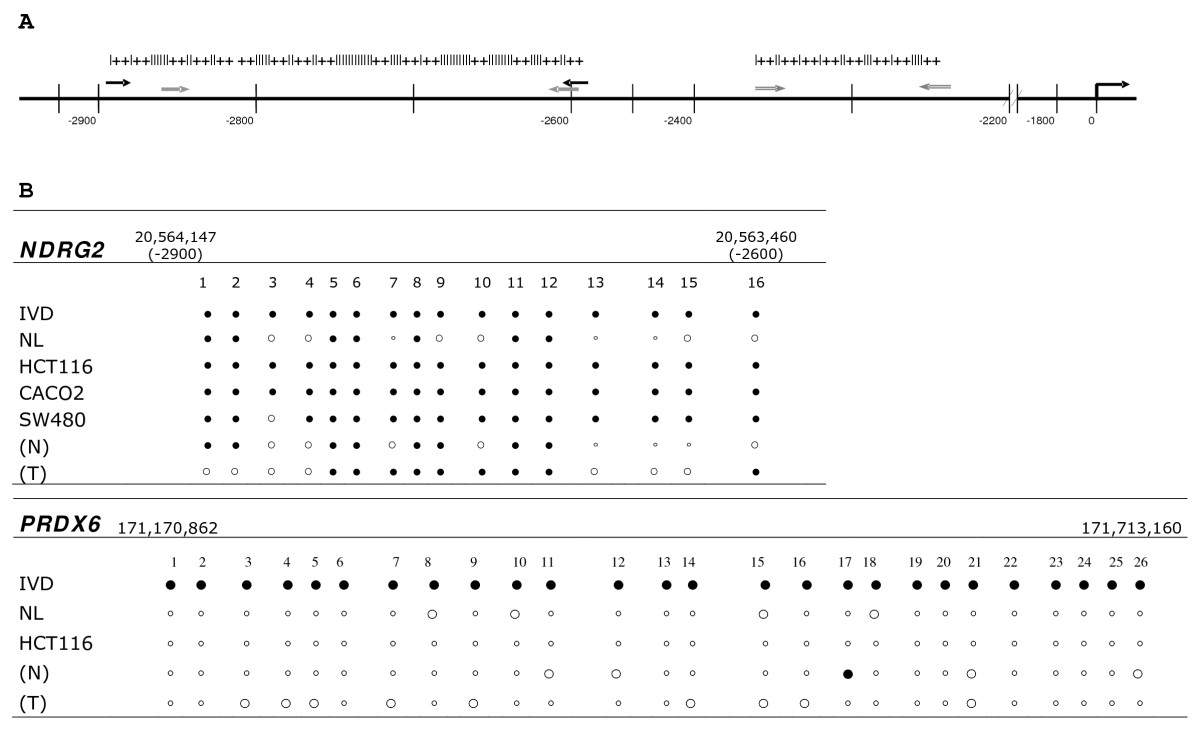 http://static-content.springer.com/image/art%3A10.1186%2F1755-8794-2-11/MediaObjects/12920_2008_Article_75_Fig3_HTML.jpg