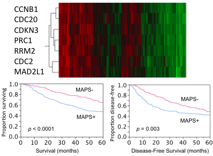 http://static-content.springer.com/image/art%3A10.1186%2F1755-8794-3-16/MediaObjects/12920_2009_Article_151_Fig4_HTML.jpg