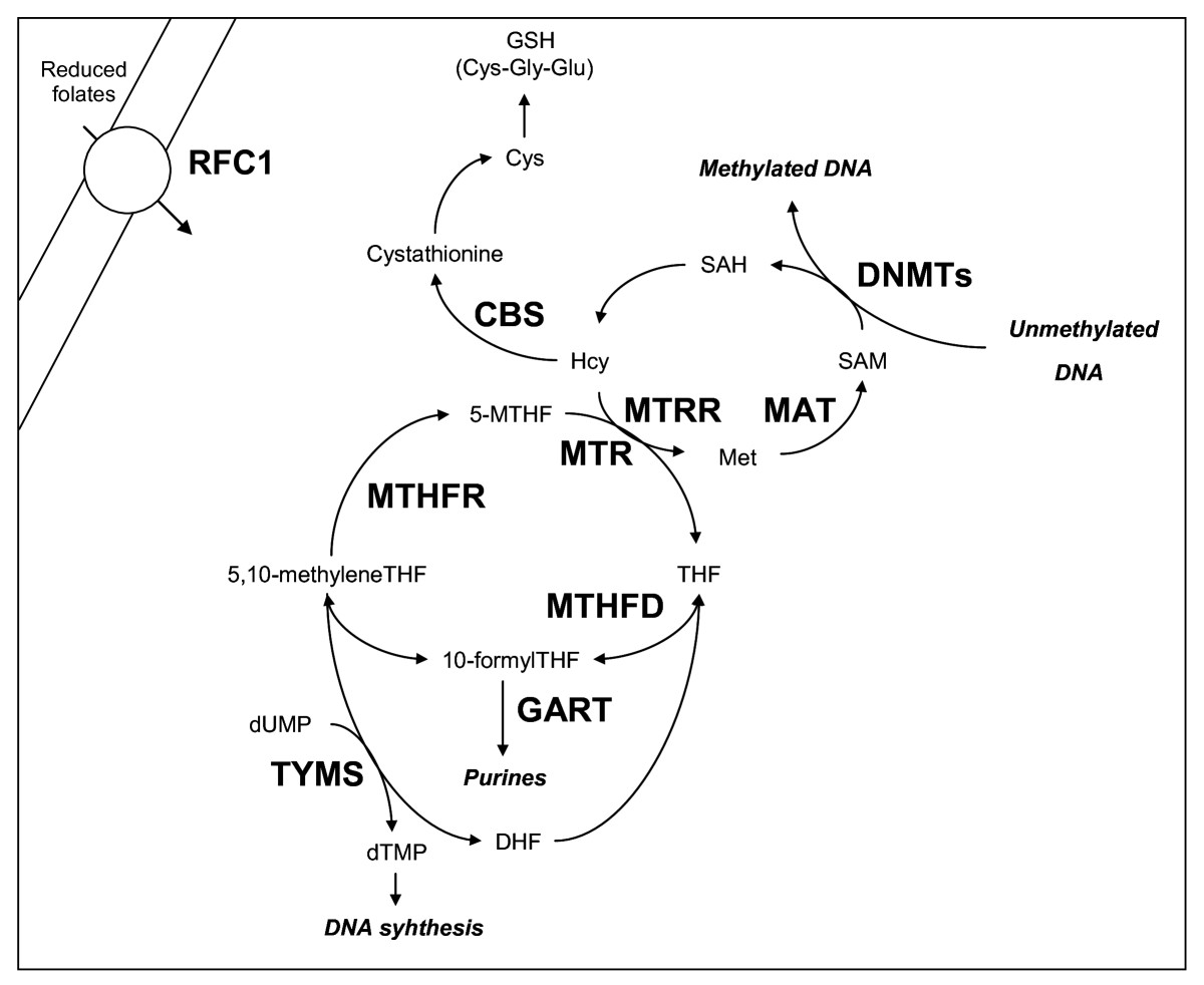 http://static-content.springer.com/image/art%3A10.1186%2F1755-8794-3-42/MediaObjects/12920_2010_Article_177_Fig1_HTML.jpg