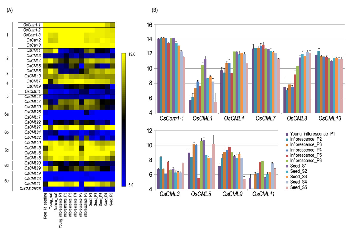 http://static-content.springer.com/image/art%3A10.1186%2F1756-0500-5-625/MediaObjects/13104_2012_Article_1920_Fig1_HTML.jpg