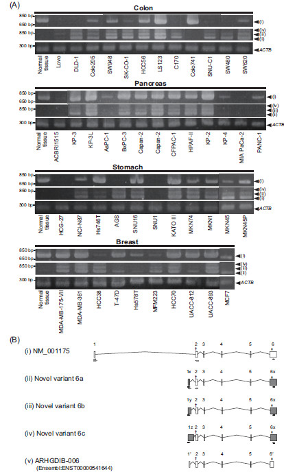 http://static-content.springer.com/image/art%3A10.1186%2F1756-0500-5-666/MediaObjects/13104_2012_Article_1992_Fig1_HTML.jpg
