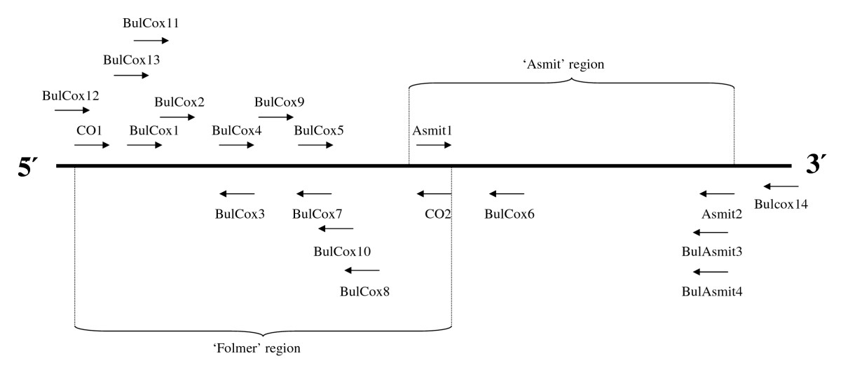 http://static-content.springer.com/image/art%3A10.1186%2F1756-3305-1-15/MediaObjects/13071_2008_Article_15_Fig2_HTML.jpg