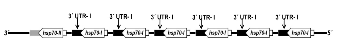 http://static-content.springer.com/image/art%3A10.1186%2F1756-3305-4-166/MediaObjects/13071_2011_Article_423_Fig3_HTML.jpg