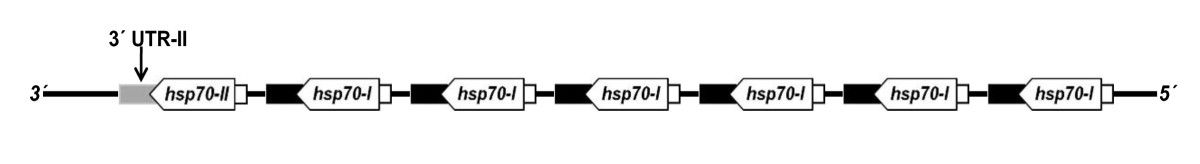 http://static-content.springer.com/image/art%3A10.1186%2F1756-3305-4-166/MediaObjects/13071_2011_Article_423_Fig5_HTML.jpg