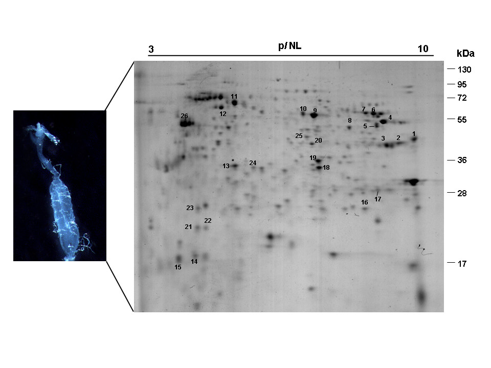 http://static-content.springer.com/image/art%3A10.1186%2F1756-3305-5-290/MediaObjects/13071_2012_Article_817_Fig1_HTML.jpg