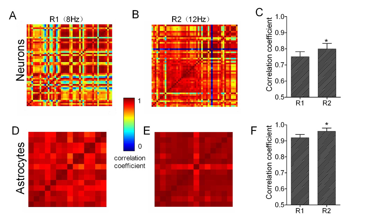 http://static-content.springer.com/image/art%3A10.1186%2F1756-6606-5-12/MediaObjects/13041_2012_Article_166_Fig4_HTML.jpg