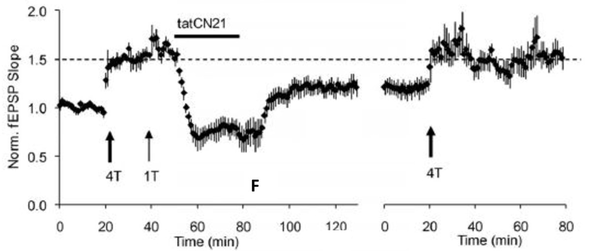 http://static-content.springer.com/image/art%3A10.1186%2F1756-6606-6-10/MediaObjects/13041_2012_Article_196_Fig1_HTML.jpg