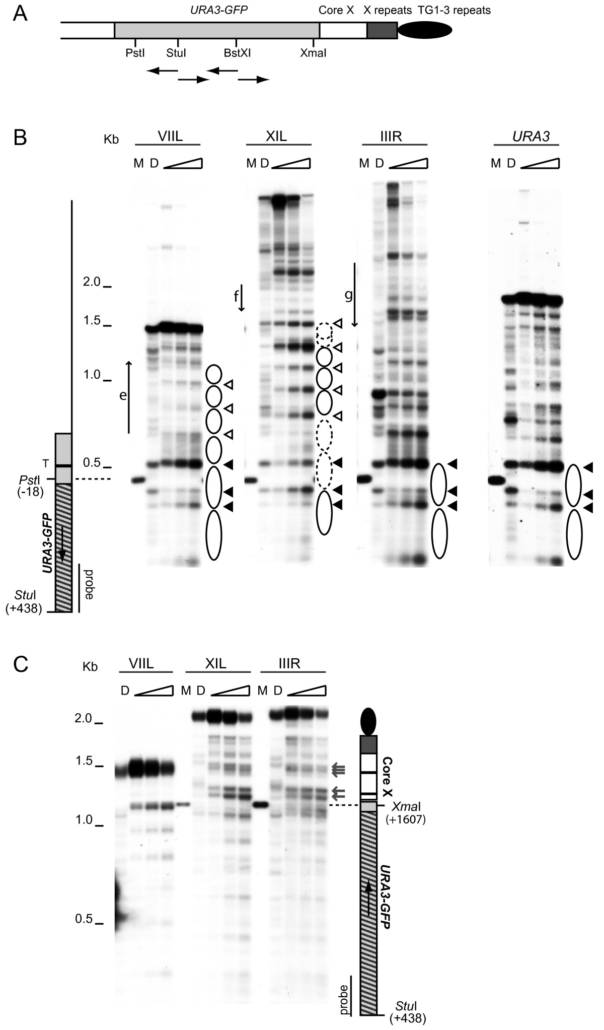 http://static-content.springer.com/image/art%3A10.1186%2F1756-8935-2-18/MediaObjects/13072_2009_Article_28_Fig1_HTML.jpg