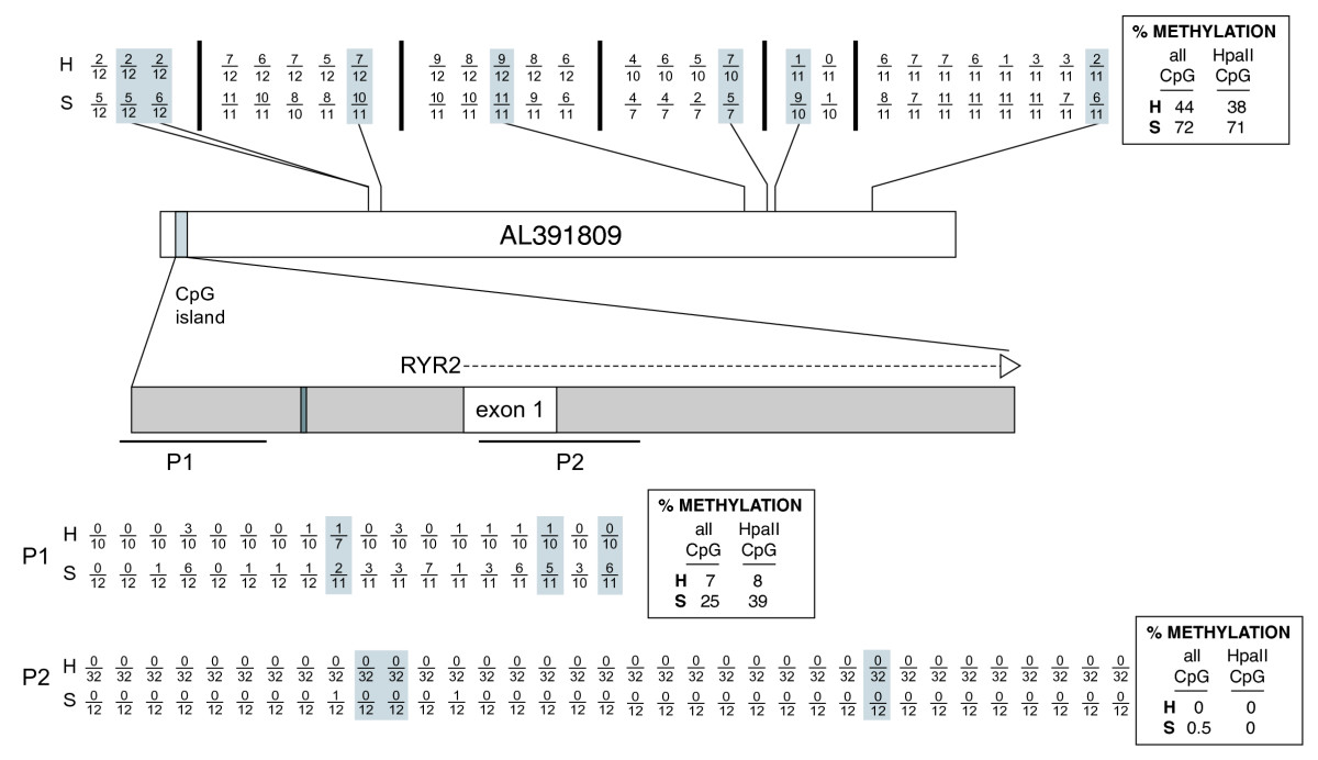 http://static-content.springer.com/image/art%3A10.1186%2F1756-8935-2-7/MediaObjects/13072_2008_Article_17_Fig6_HTML.jpg