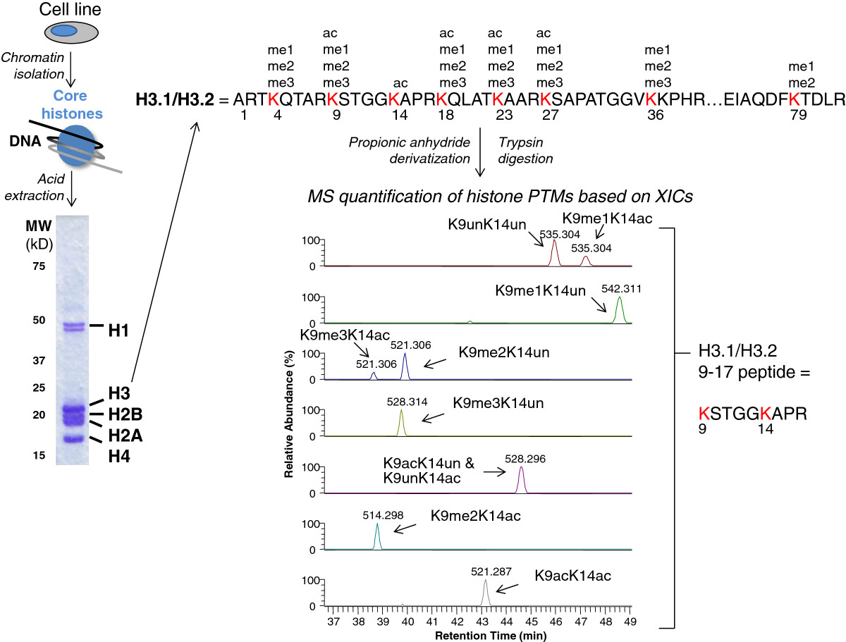 http://static-content.springer.com/image/art%3A10.1186%2F1756-8935-6-20/MediaObjects/13072_2013_Article_292_Fig2_HTML.jpg