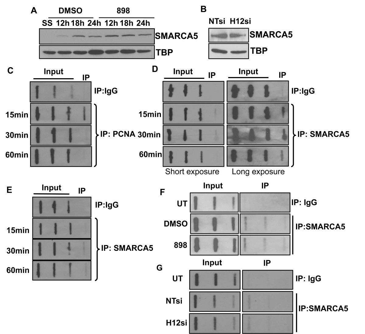http://static-content.springer.com/image/art%3A10.1186%2F1756-8935-6-27/MediaObjects/13072_2013_Article_298_Fig6_HTML.jpg