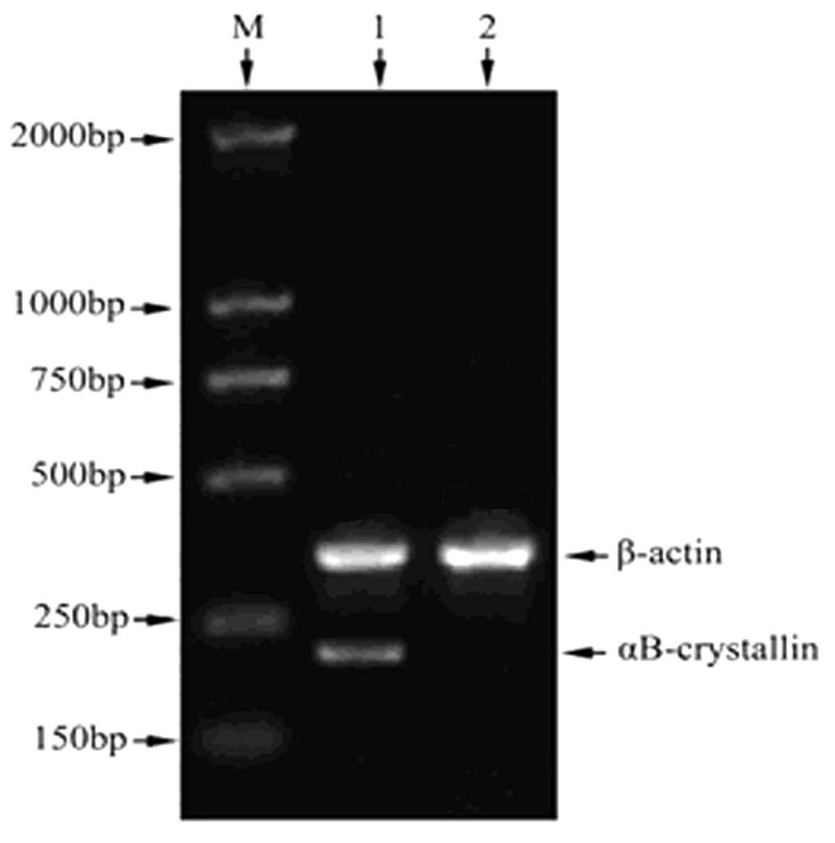 http://static-content.springer.com/image/art%3A10.1186%2F1756-9966-31-101/MediaObjects/13046_2012_Article_637_Fig1_HTML.jpg