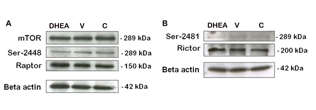 http://static-content.springer.com/image/art%3A10.1186%2F1757-2215-5-38/MediaObjects/13048_2012_Article_118_Fig5_HTML.jpg
