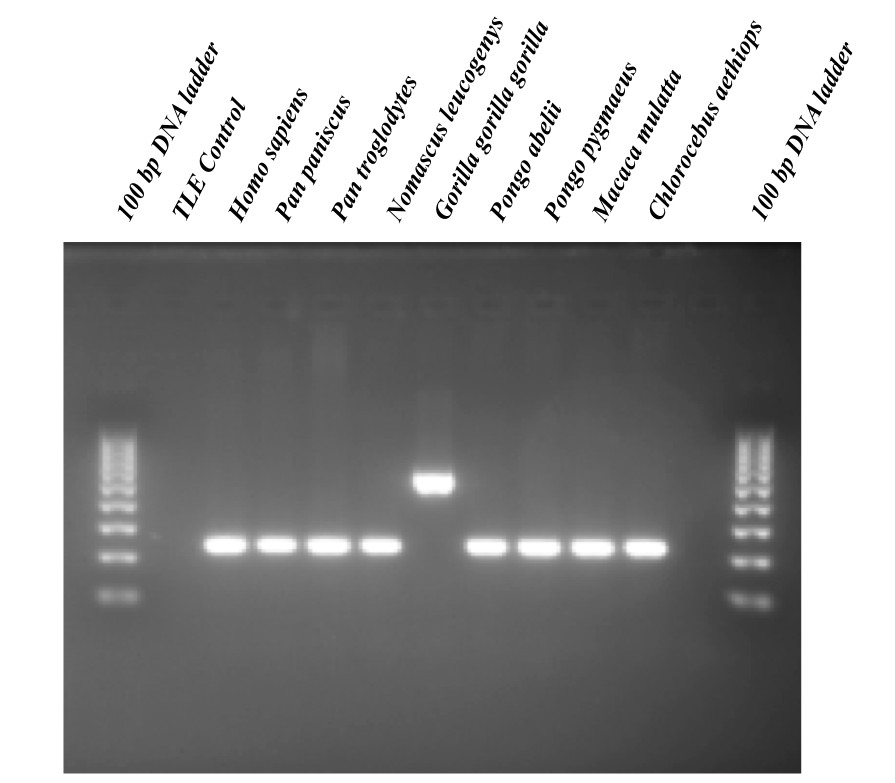 http://static-content.springer.com/image/art%3A10.1186%2F1759-8753-4-26/MediaObjects/13100_2013_Article_86_Fig3_HTML.jpg