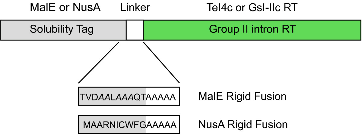 http://static-content.springer.com/image/art%3A10.1186%2F1759-8753-5-2/MediaObjects/13100_2013_Article_89_Fig9_HTML.jpg