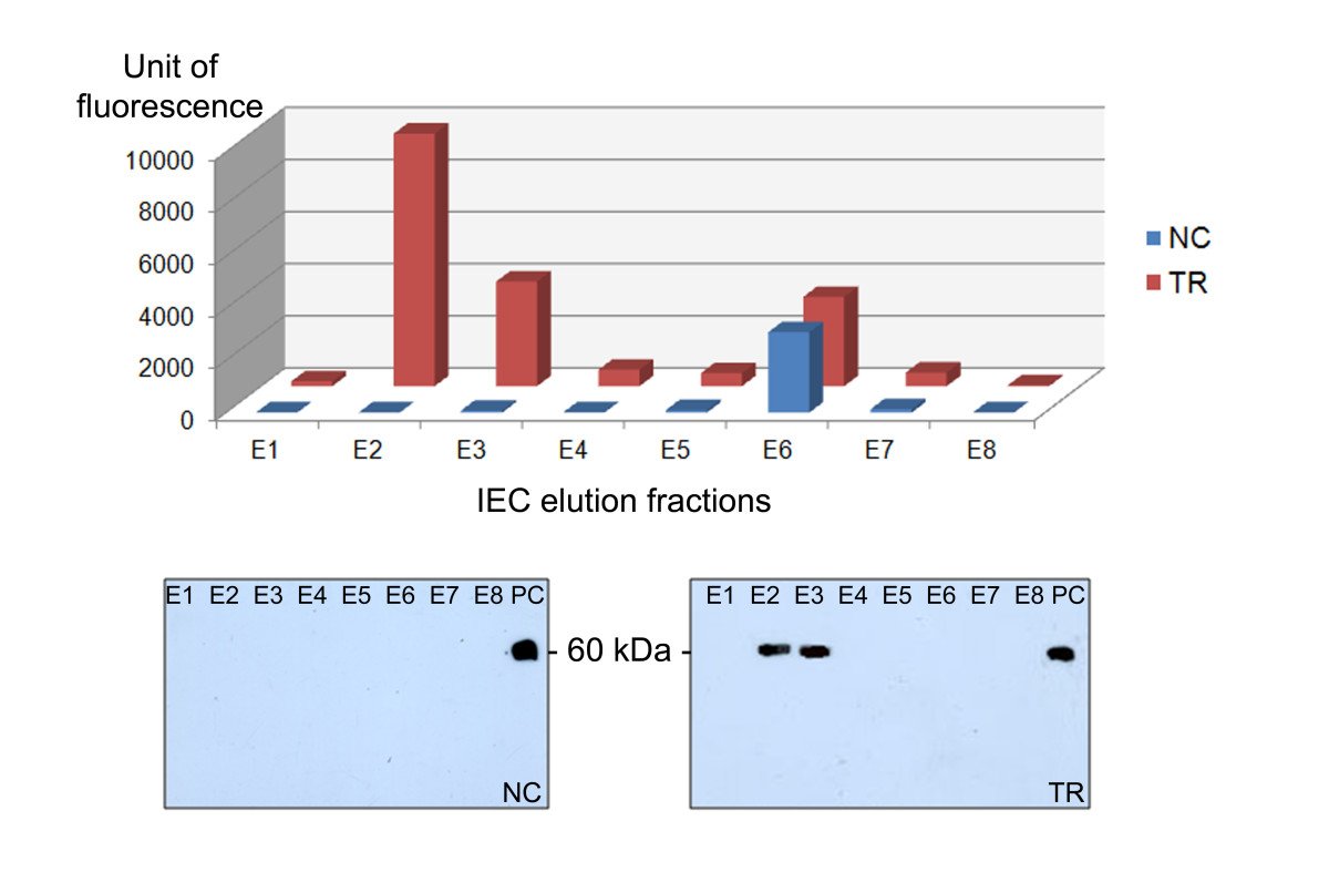 http://static-content.springer.com/image/art%3A10.1186%2F1939-8433-5-34/MediaObjects/12284_2012_Article_37_Fig11_HTML.jpg