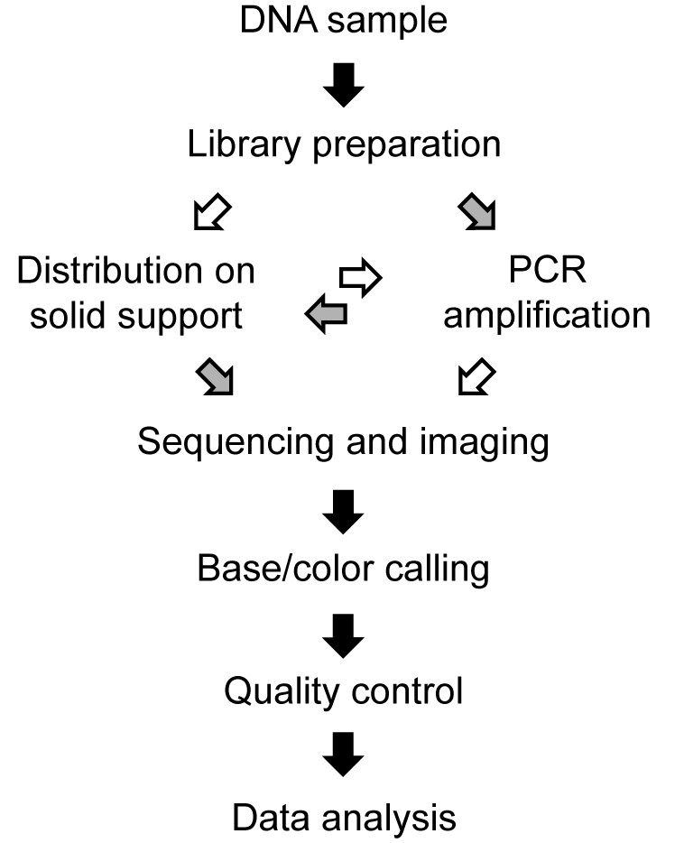 http://static-content.springer.com/image/art%3A10.1186%2F2041-2223-2-23/MediaObjects/13323_2011_Article_42_Fig1_HTML.jpg