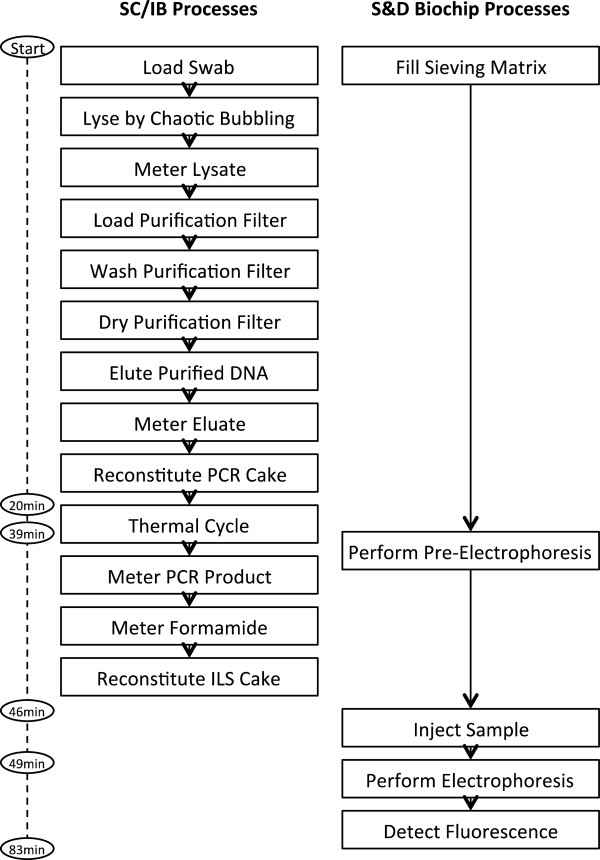 http://static-content.springer.com/image/art%3A10.1186%2F2041-2223-4-16/MediaObjects/13323_2013_Article_80_Fig4_HTML.jpg
