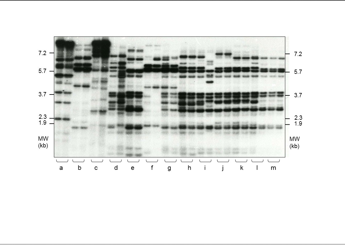 http://static-content.springer.com/image/art%3A10.1186%2F2041-2223-5-1/MediaObjects/13323_2013_Article_93_Fig1_HTML.jpg