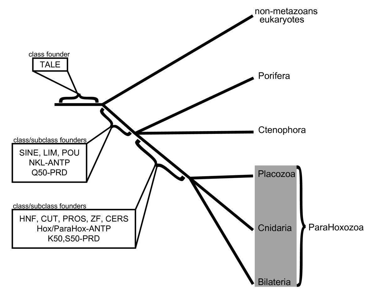 http://static-content.springer.com/image/art%3A10.1186%2F2041-9139-1-9/MediaObjects/13227_2010_Article_9_Fig6_HTML.jpg