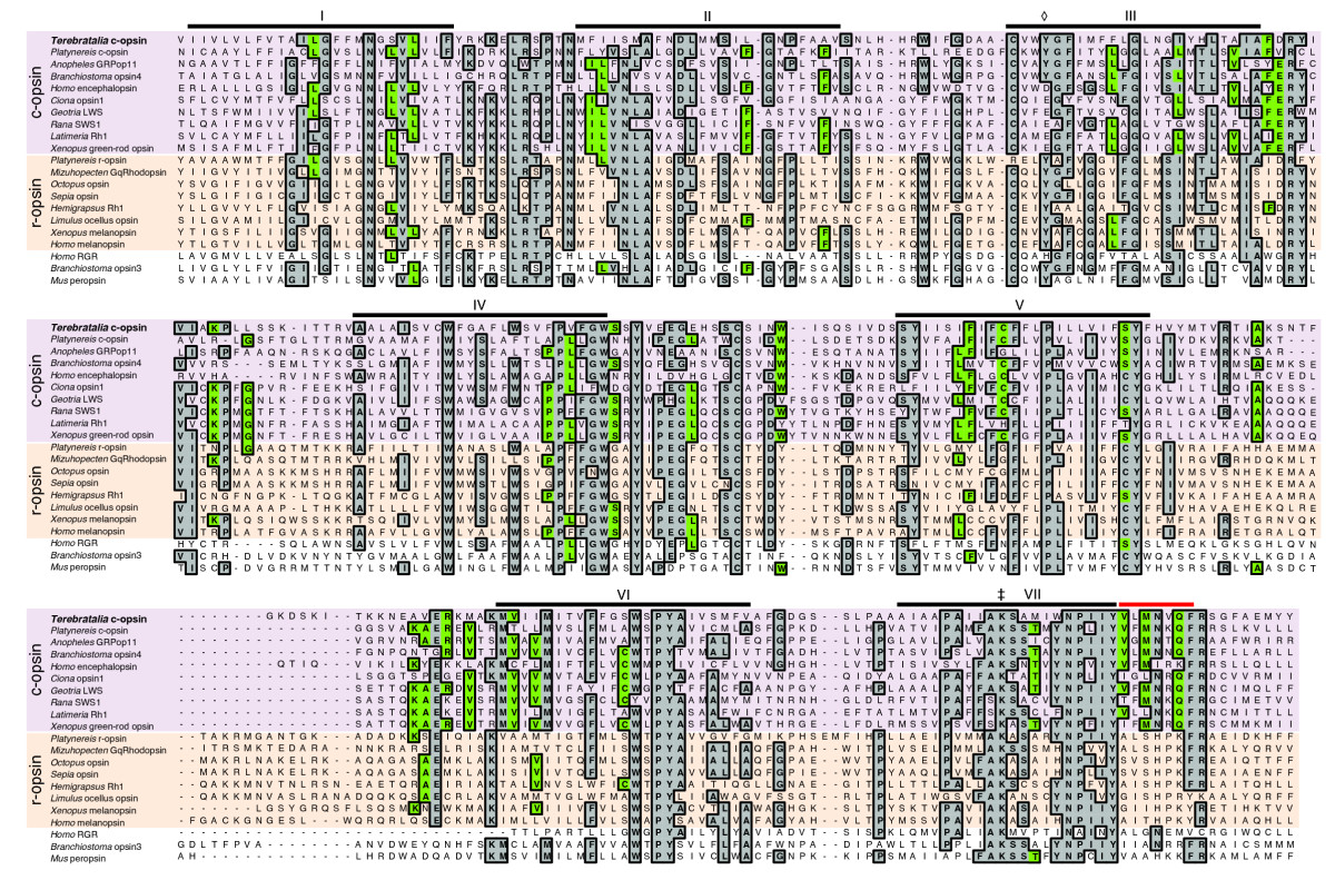 http://static-content.springer.com/image/art%3A10.1186%2F2041-9139-2-6/MediaObjects/13227_2010_Article_21_Fig2_HTML.jpg