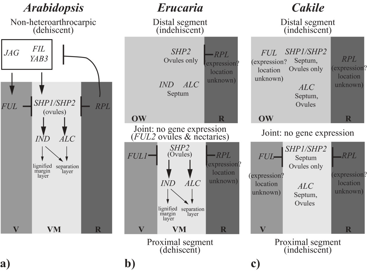 http://static-content.springer.com/image/art%3A10.1186%2F2041-9139-3-20/MediaObjects/13227_2012_Article_58_Fig5_HTML.jpg