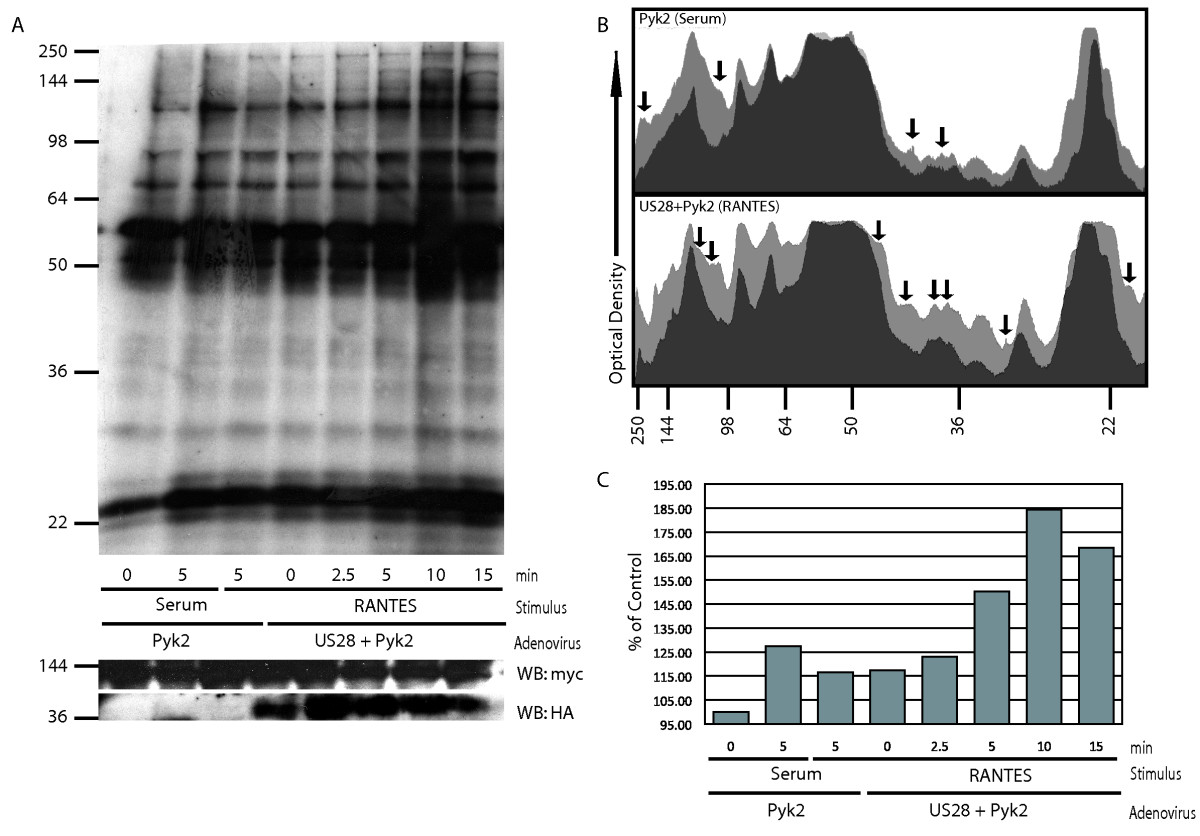 http://static-content.springer.com/image/art%3A10.1186%2F2042-4280-1-2/MediaObjects/13276_2010_Article_2_Fig3_HTML.jpg