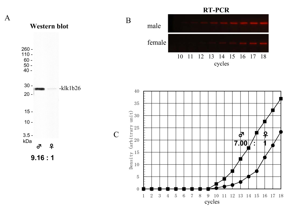 http://static-content.springer.com/image/art%3A10.1186%2F2042-6410-2-13/MediaObjects/13293_2011_Article_22_Fig1_HTML.jpg
