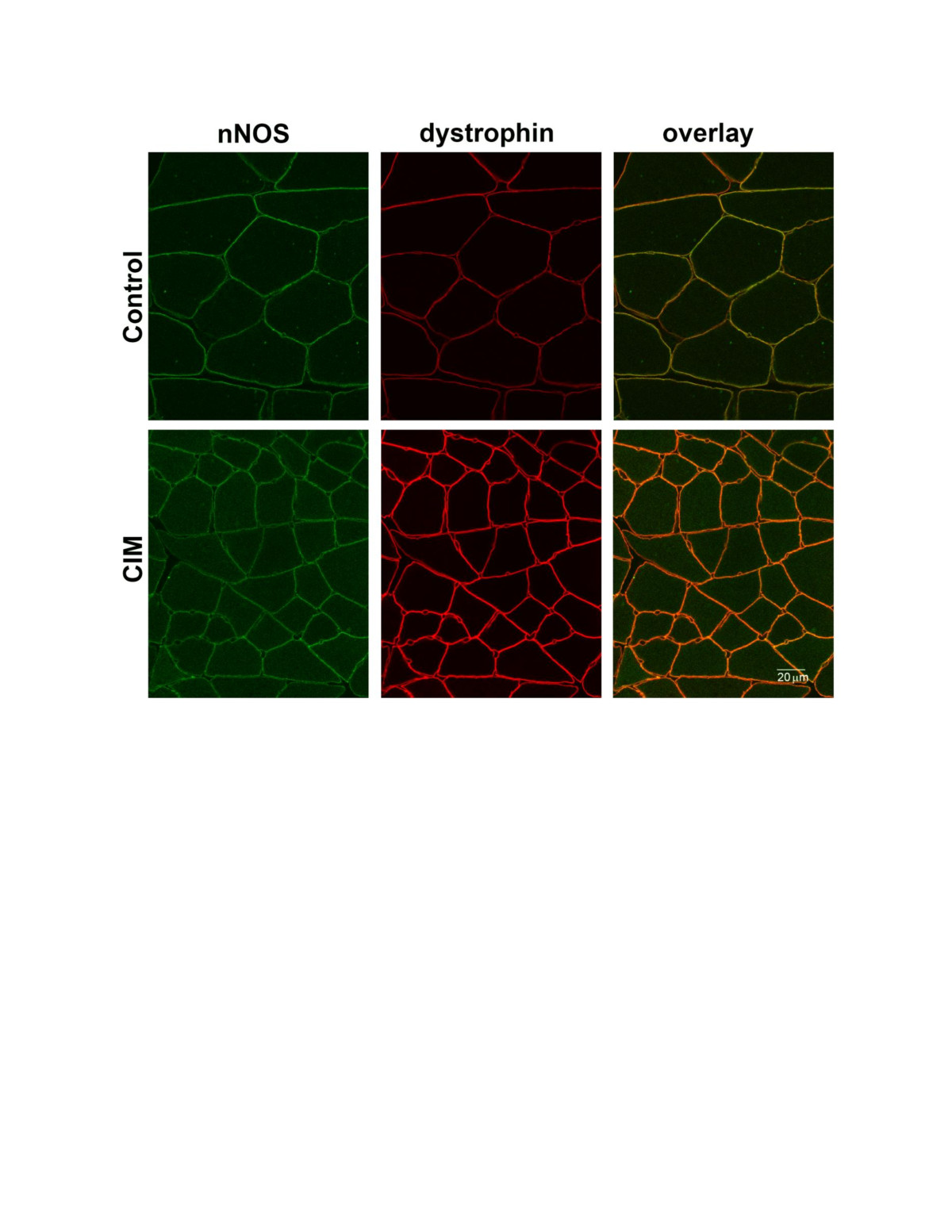 http://static-content.springer.com/image/art%3A10.1186%2F2044-5040-2-17/MediaObjects/13395_2012_Article_50_Fig6_HTML.jpg