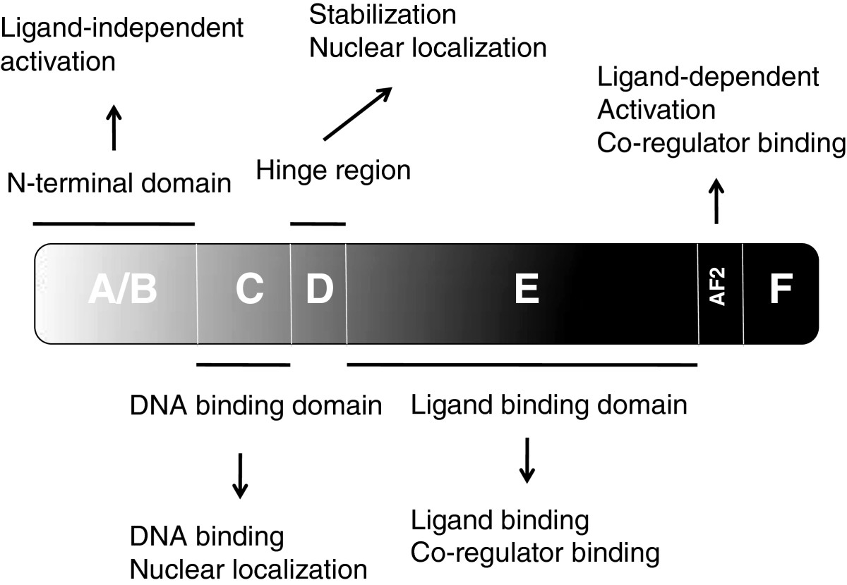 http://static-content.springer.com/image/art%3A10.1186%2F2045-3701-2-33/MediaObjects/13578_2012_Article_85_Fig1_HTML.jpg
