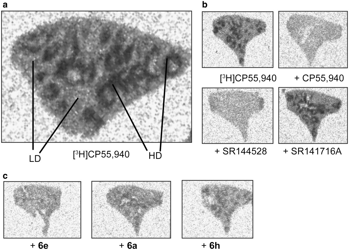 http://static-content.springer.com/image/art%3A10.1186%2F2191-2858-2-32/MediaObjects/13588_2012_Article_50_Fig4_HTML.jpg