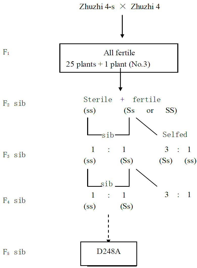http://static-content.springer.com/image/art%3A10.1186%2F2193-1801-2-268/MediaObjects/40064_2013_Article_349_Fig1_HTML.jpg