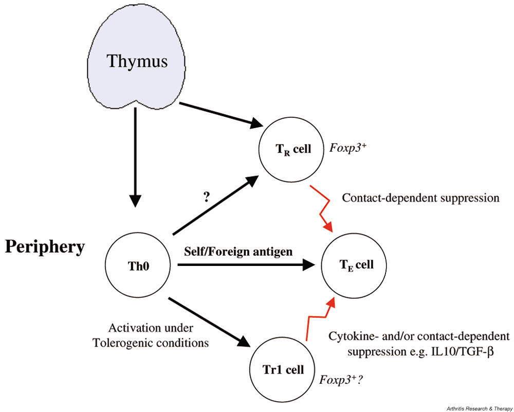 http://static-content.springer.com/image/art%3A10.1186%2Far1037/MediaObjects/13075_2003_Article_1027_Fig1_HTML.jpg