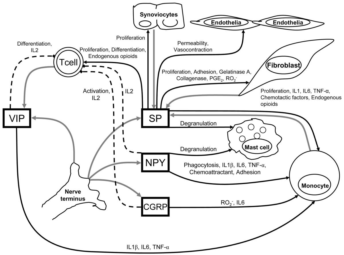 http://static-content.springer.com/image/art%3A10.1186%2Far1852/MediaObjects/13075_2005_Article_1724_Fig1_HTML.jpg