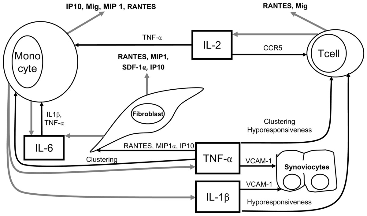 http://static-content.springer.com/image/art%3A10.1186%2Far1852/MediaObjects/13075_2005_Article_1724_Fig2_HTML.jpg