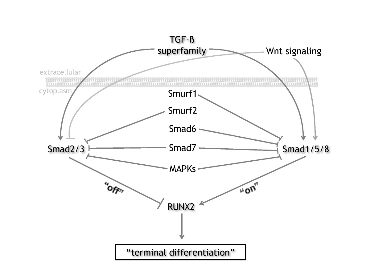 http://static-content.springer.com/image/art%3A10.1186%2Far2896/MediaObjects/13075_2010_Article_2732_Fig1_HTML.jpg