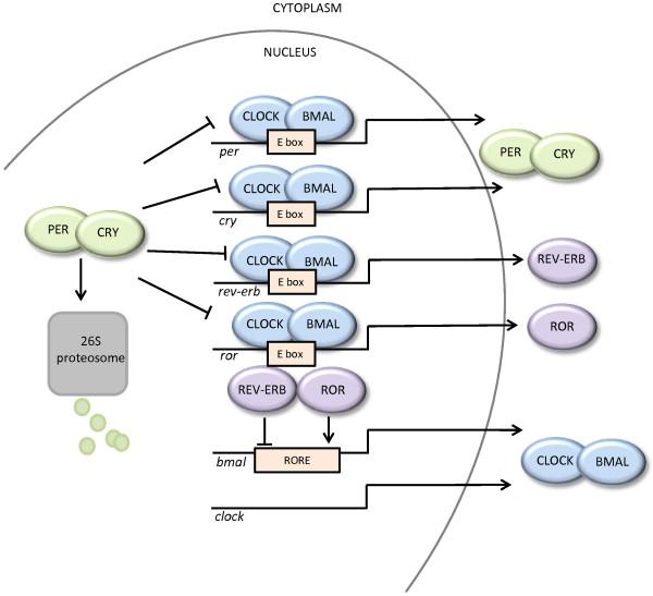 http://static-content.springer.com/image/art%3A10.1186%2Far4146/MediaObjects/13075_2013_3888_Fig2_HTML.jpg
