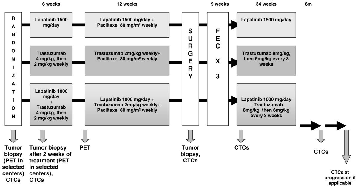 http://static-content.springer.com/image/art%3A10.1186%2Fbcr2209/MediaObjects/13058_2009_Article_2178_Fig2_HTML.jpg