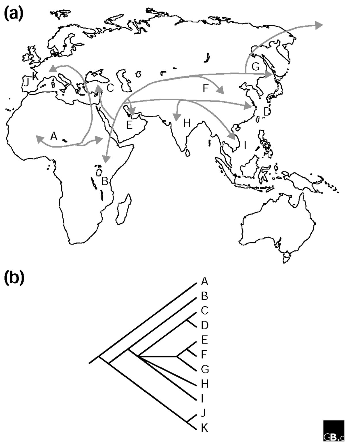 http://static-content.springer.com/image/art%3A10.1186%2Fgb-2003-4-5-213/MediaObjects/13059_2003_Article_627_Fig3_HTML.jpg