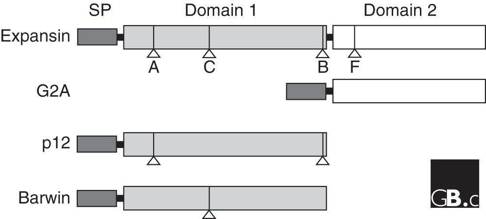 http://static-content.springer.com/image/art%3A10.1186%2Fgb-2005-6-12-242/MediaObjects/13059_2005_Article_986_Fig1_HTML.jpg
